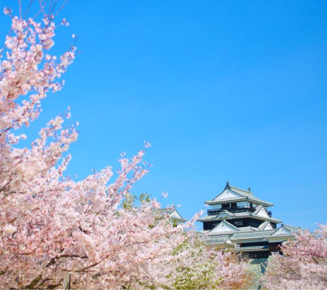 四國瀨戶內松山 | 松山市旅遊官方網站