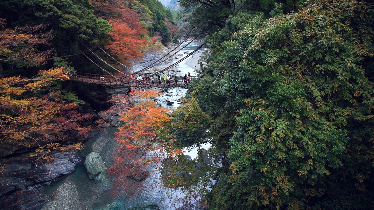 祖谷的吊橋