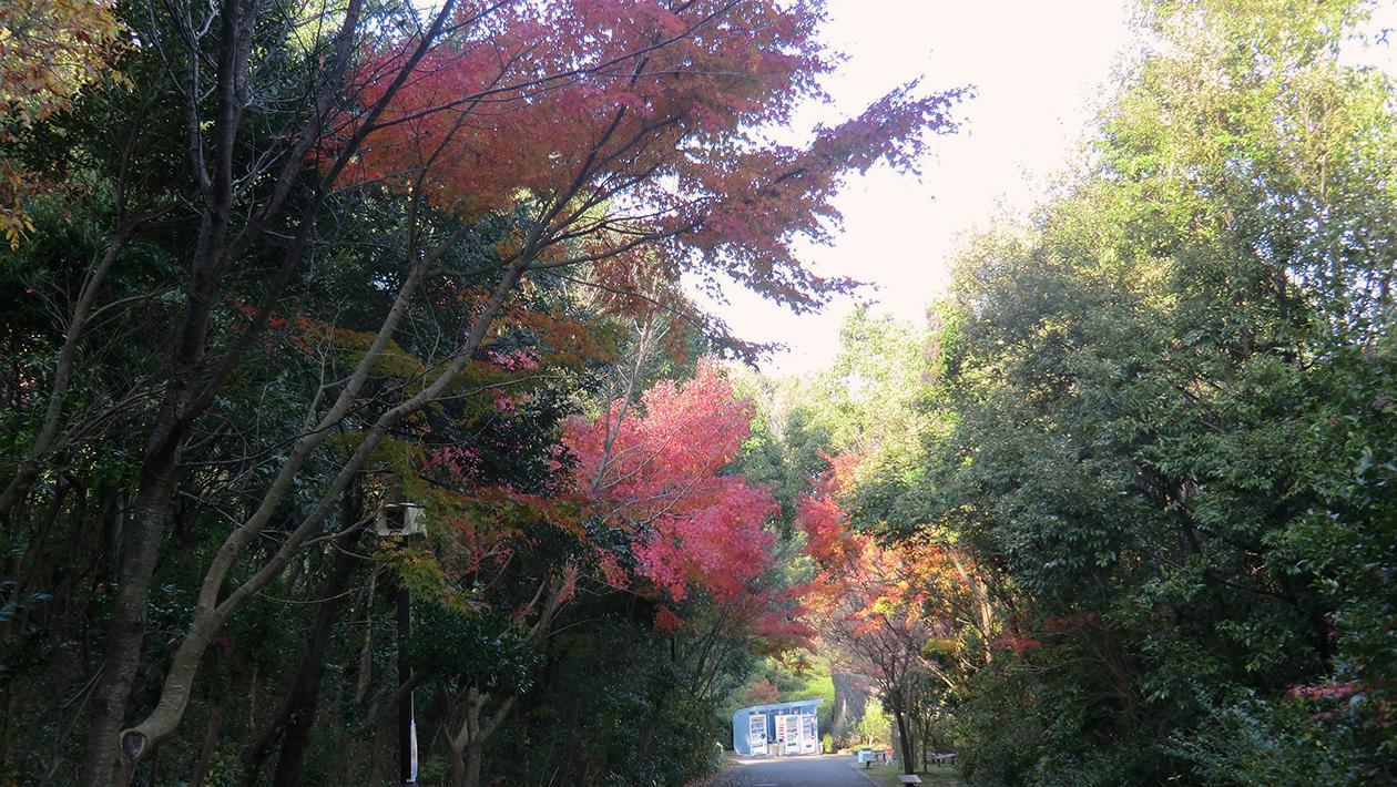 松山綜合公園